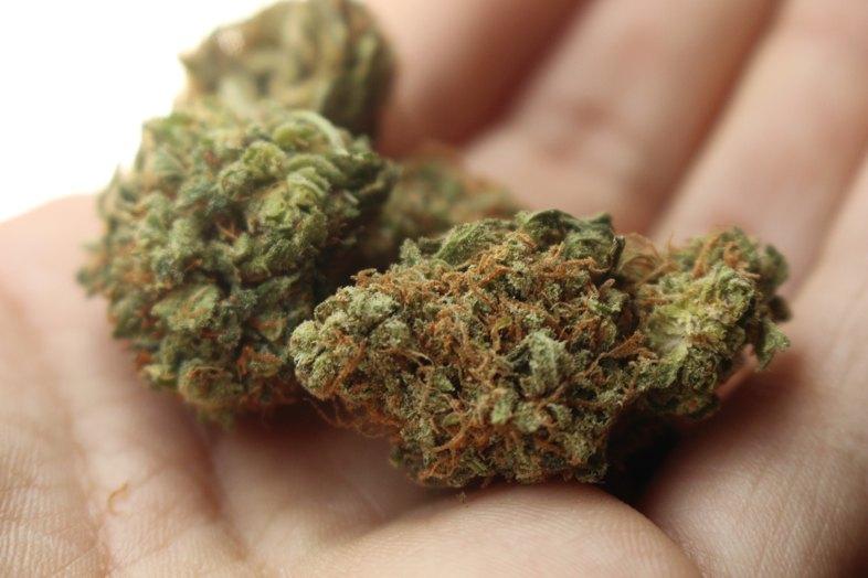 Lernen wir Amnesia besser kennen, eine der besten Marihuana-Sorten der Welt