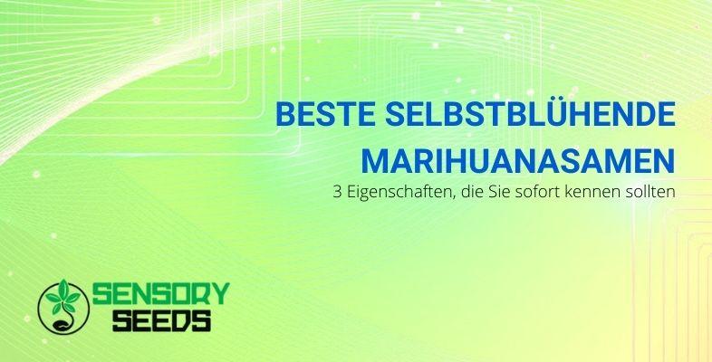 Die 3 Eigenschaften, um die besten selbstblühenden Cannabissamen zu kennen