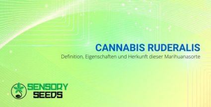 Die Eigenschaften und Ursprünge von Ruderalis Cannabis