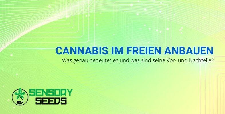 Vor- und Nachteile des Cannabisanbaus im Freien