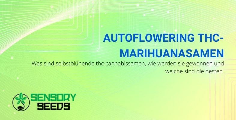 Was sind selbstblühende Marihuanasamen und welche sind zu wählen?
