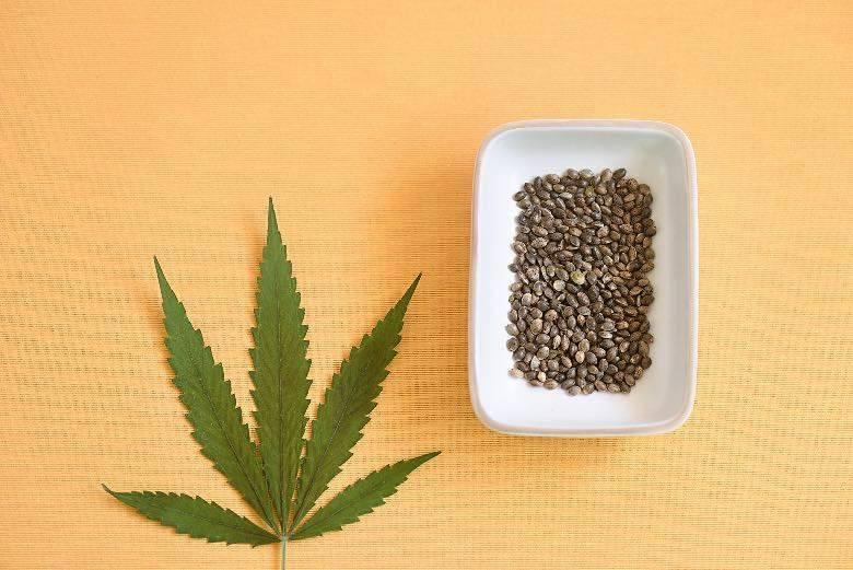 Ovoid geformte selbstblühende Cannabissamen
