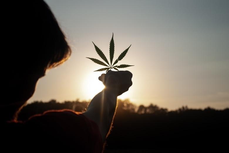 Cannabis: therapeutische Vorteile