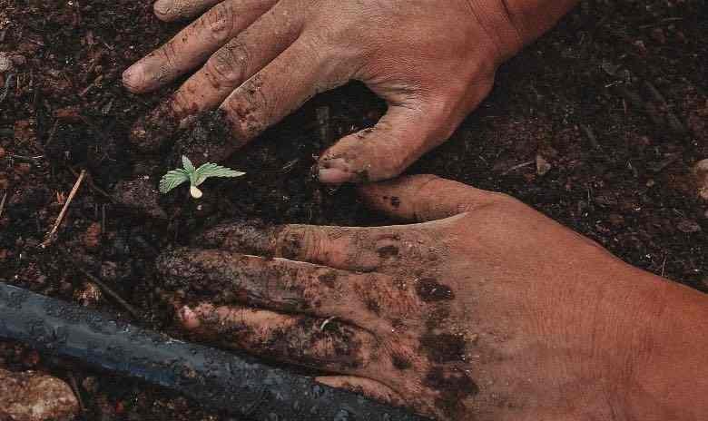 Der Übergang vom Keimling zur vegetativen Phase