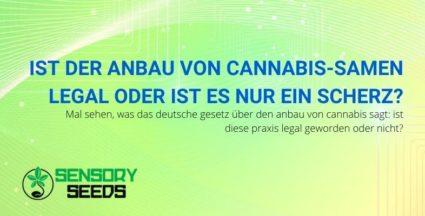 Ist der Anbau von Cannabis-Samen nun legal oder nicht?