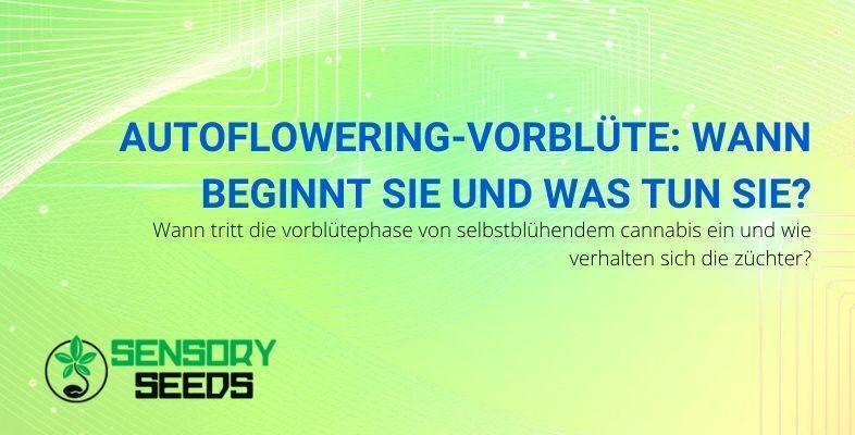 Alles, was Sie über die autoflowering Vorblütephase wissen müssen