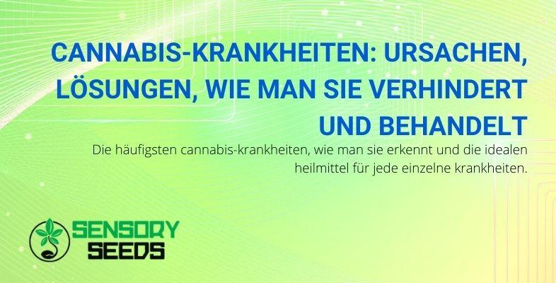 Ursachen und Lösungen für die häufigsten Cannabiskrankheiten