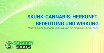 Die Ursprünge, Eigenschaften und Wirkungen von Skunk Cannabis