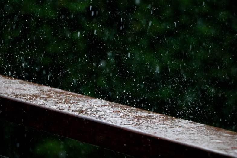 Regen ist gefährlich für die Blüte im Freien