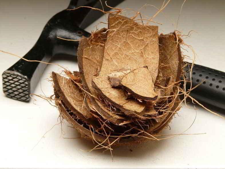 Was ist Kokosfaser?