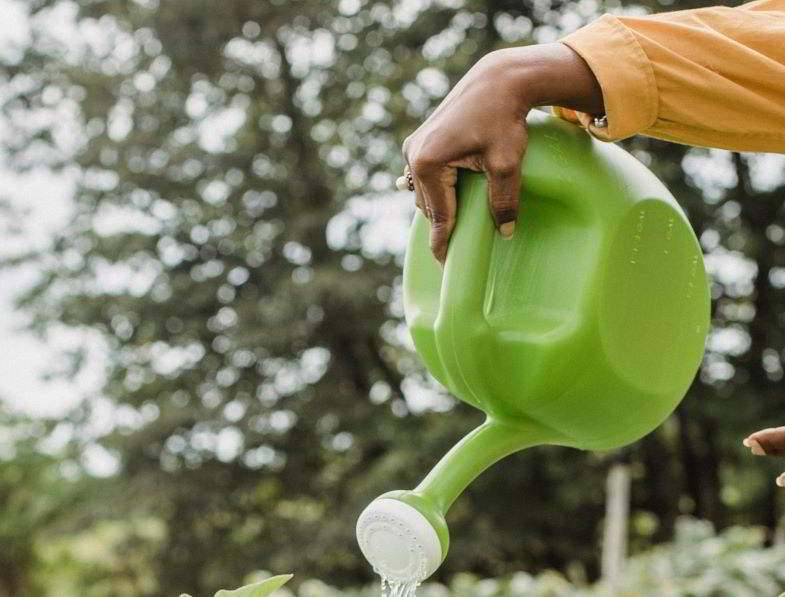 Pflanze mit verkümmertem Wachstum durch zu viel Gießen.