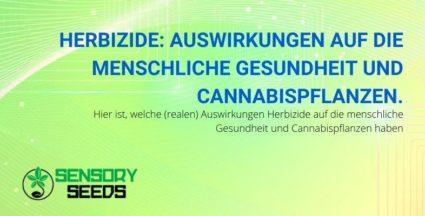Herbizid: die schädlichen Auswirkungen auf Menschen und Cannabispflanzen