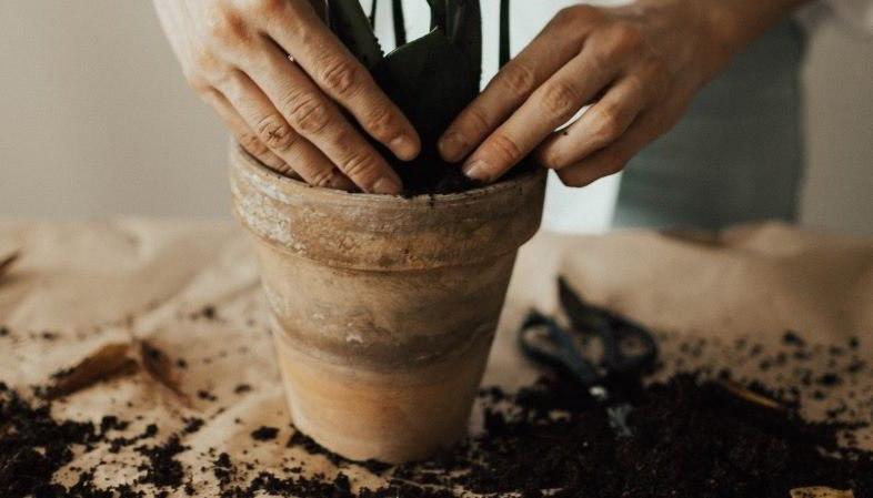 Wie topfe ich eine Cannabispflanze um?