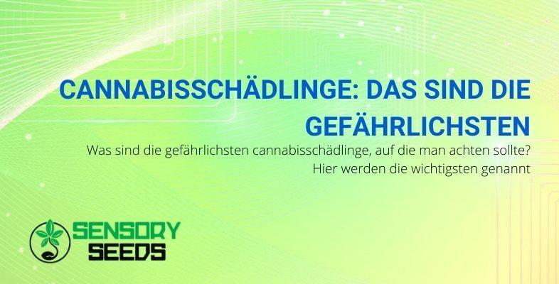 Die gefährlichsten Schädlinge für die Cannabispflanze