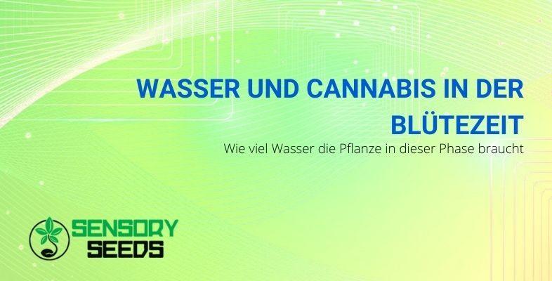 Die Wasserdosen für Cannabis in der Blütephase