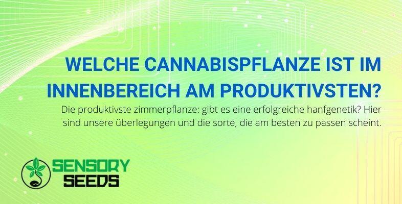 Die produktivste Indoor-Cannabispflanze