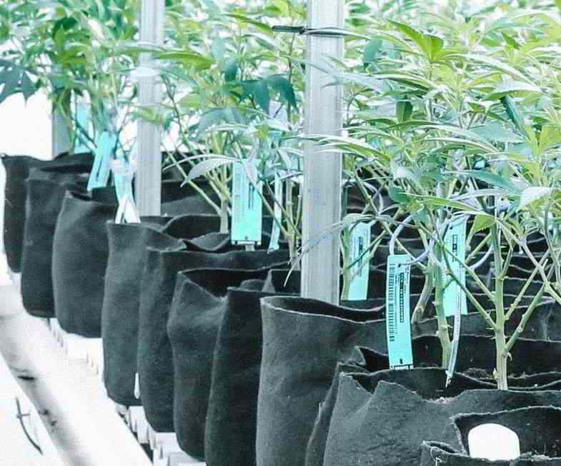 Unregelmäßige Topfform: Stoffbehälter für Cannabis