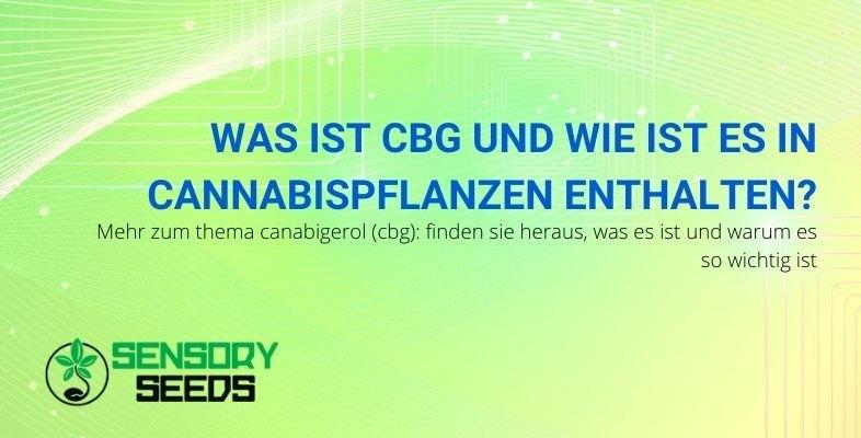Erfahre mehr über Cannabigerol CBG