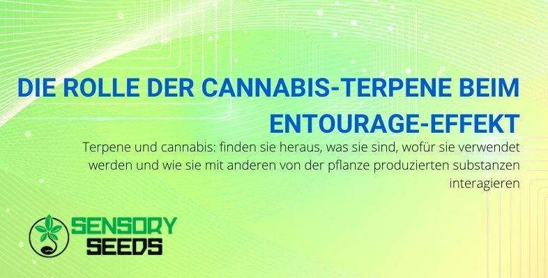 Was sind Cannabisterpene und welche Rolle spielen sie?