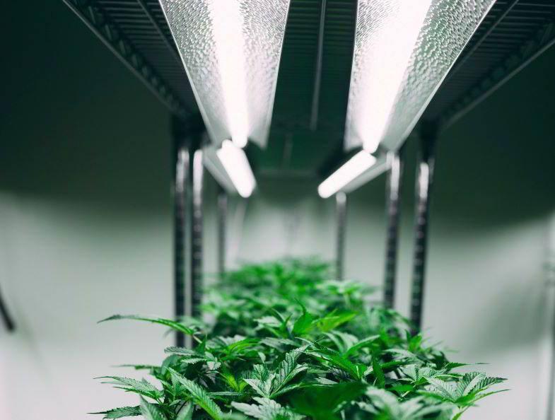 Indoor-Marihuana-Anbau