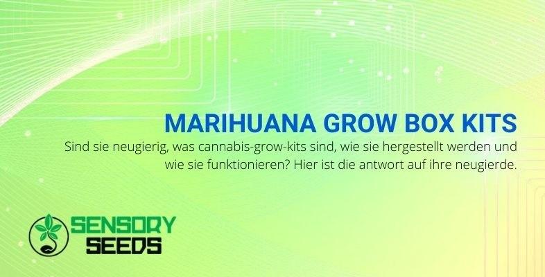 Kurioses über Cannabis-Growbox-Kits