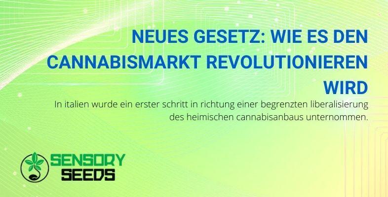 Wie wird sich der Cannabismarkt durch das neue Gesetz verändern?